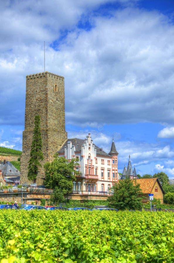 Weinberg nahe mittelalterlicher Schlossfestung Boosenburg in Ruedesheim, Hessen, Deutschland stockfotografie