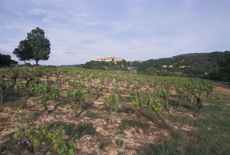 Weinberg in Provence, Frankreich lizenzfreies stockfoto