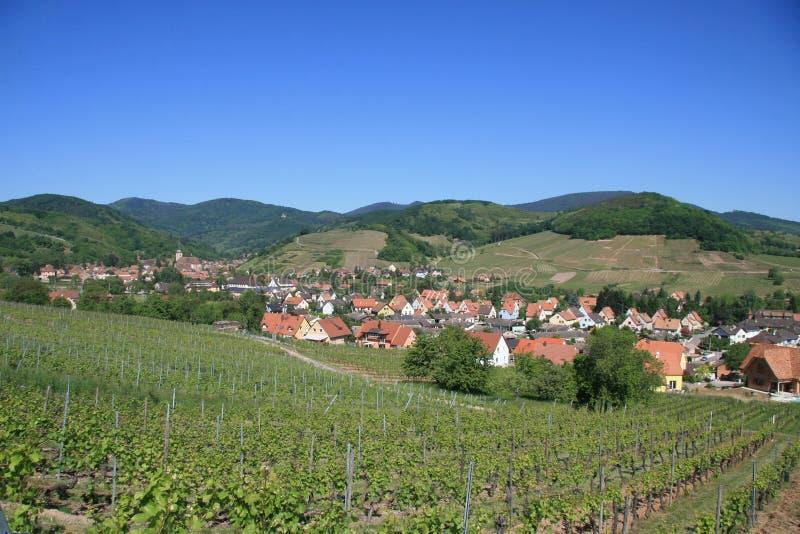 Weinberg und Dorf in Elsass stockfoto