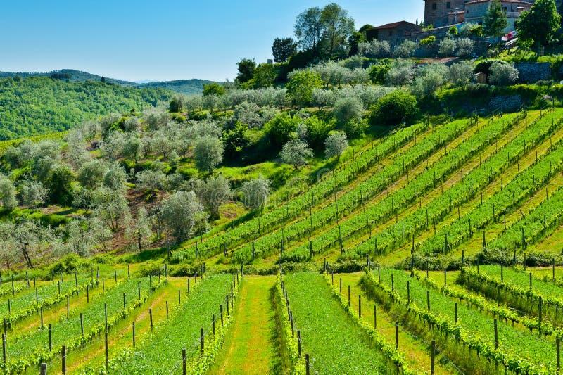Download Weinberg und Olive stockbild. Bild von nave, villa, ernte - 26354037