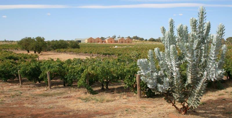 Weinberg und Weinkellerei lizenzfreie stockfotografie