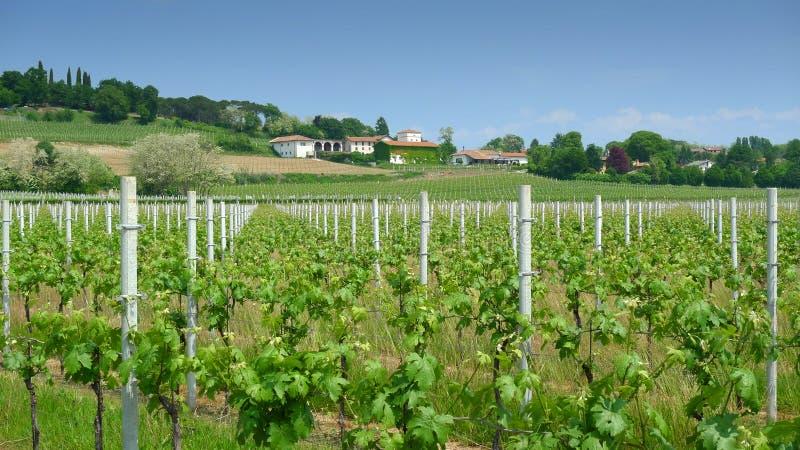 Weinberg und Weinkellerei lizenzfreies stockbild