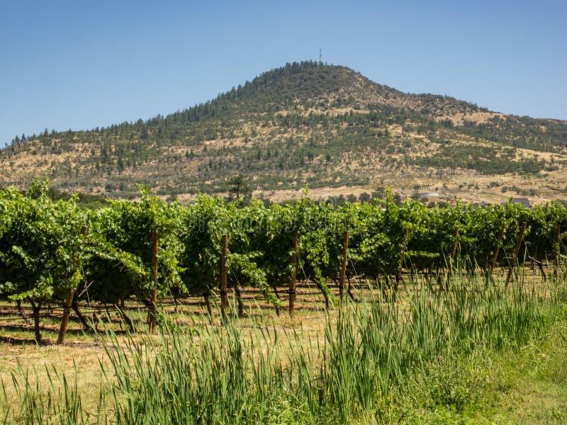 Weinberg und Weinkellerei im ländlichen Gebiet stockbild
