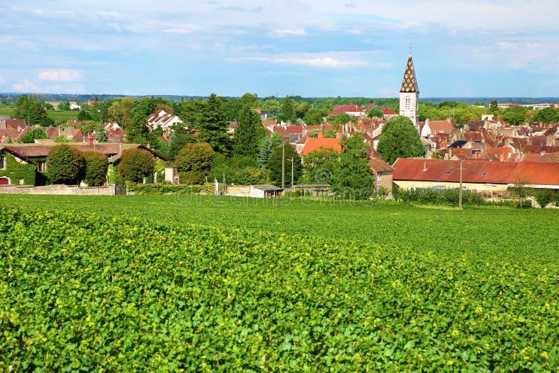 Weinberg von Nuit-Heiligem Georges in Burgunder von Frankreich stockbilder
