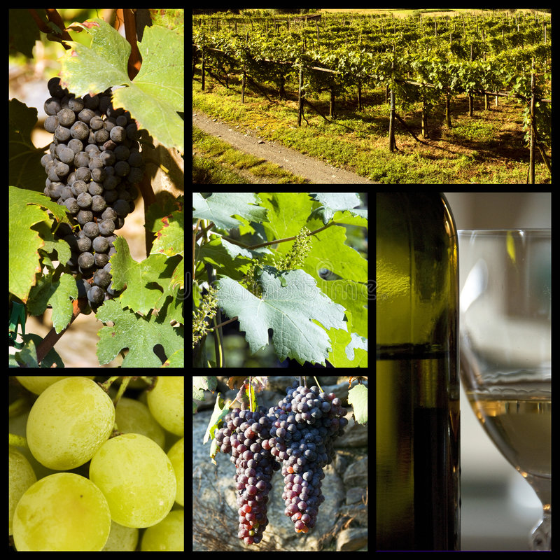 Weinbergcollage lizenzfreie stockfotos
