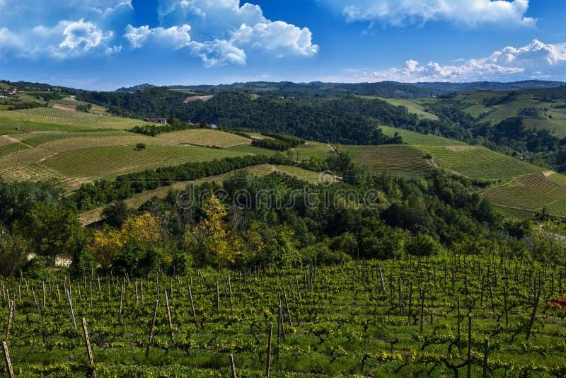 Weinberge auf den schönen Hügeln im Langhe-Bereich von Barbaresco in Piemont Italien auf der Meruzzano-Seite stockbild