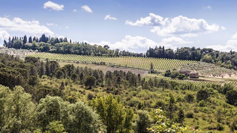 Weinberge des Chiantis in Toskana stockbilder