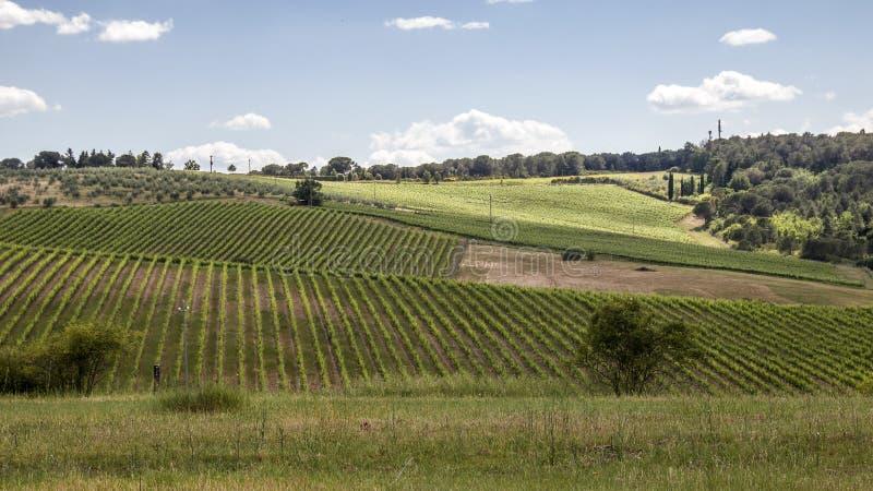 Weinberge des Chiantis in Toskana stockfoto