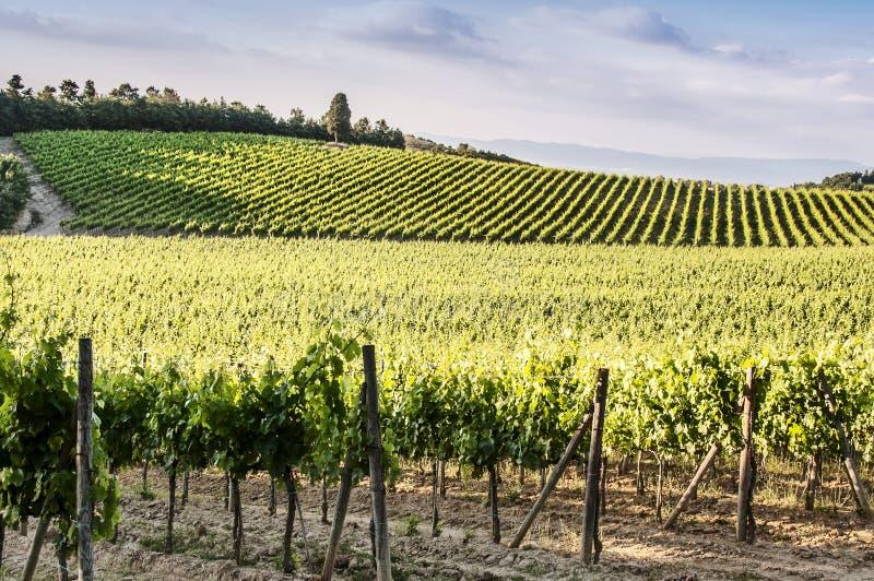 Weinberge des Chiantis in Toskana stockbild