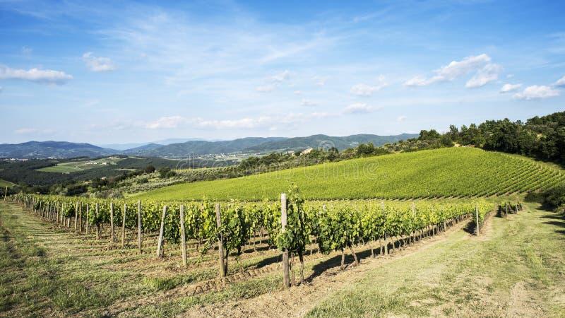 Weinberge des Chiantis in Toskana lizenzfreies stockfoto