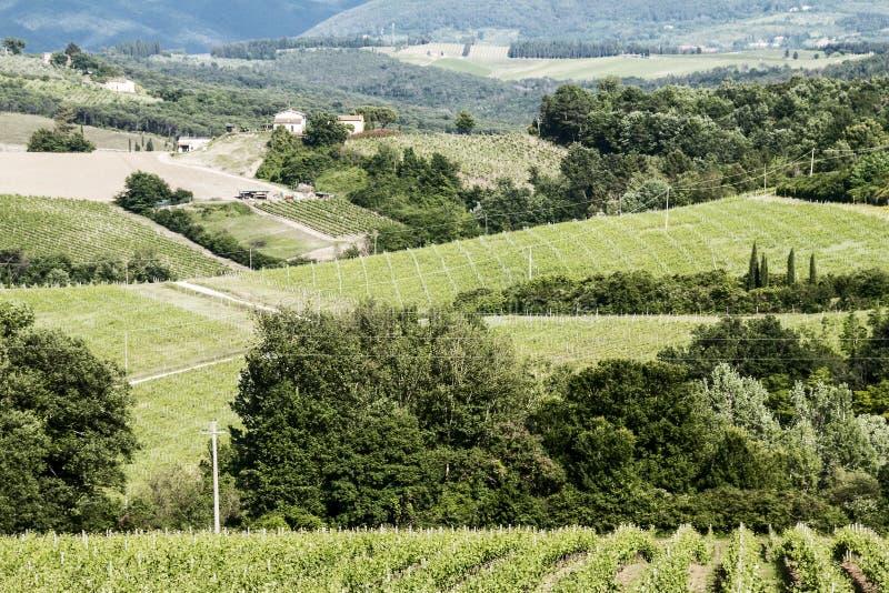 Weinberge des Chiantis in Toskana stockfotos