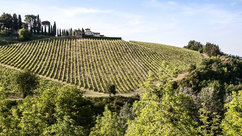Weinberge des Chiantis in Toskana stockfotografie