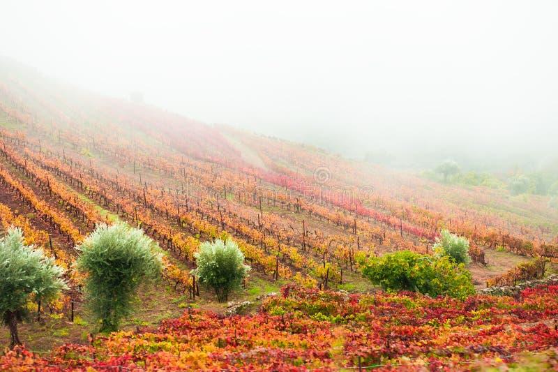 Weinberge im Douro-Tal in Portugal stockfotografie
