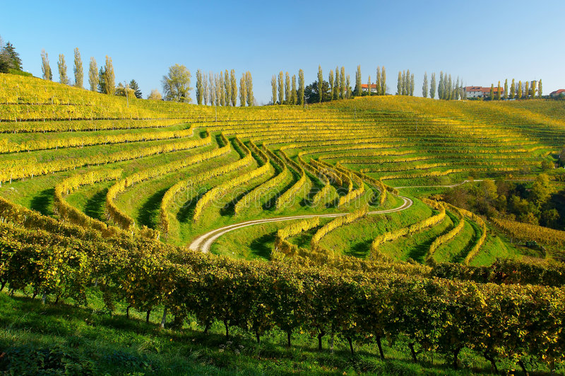 Weinberge im Herbst lizenzfreies stockbild
