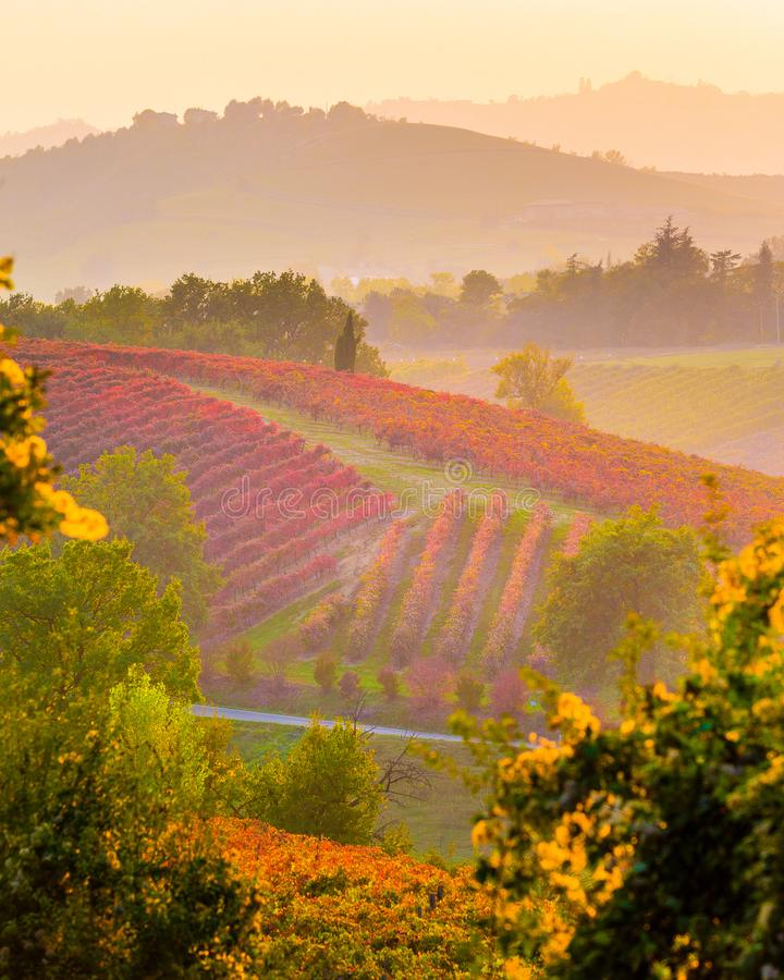 Weinberge im Herbst, Castelvetro-Di Modena stockfoto