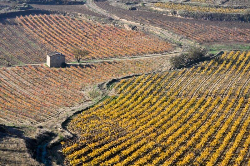 Weinberge im Herbst (Spanien) lizenzfreie stockbilder