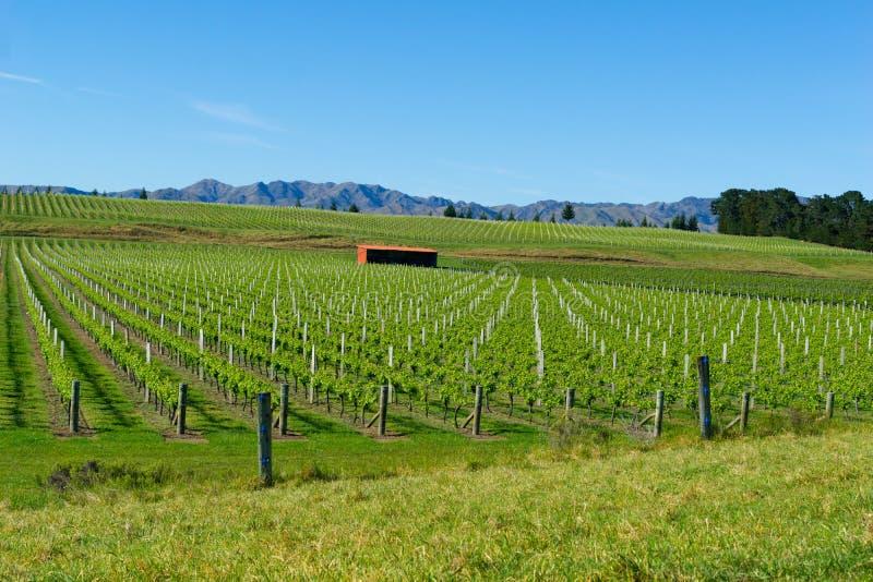Weinberge in Marlborough lizenzfreies stockbild