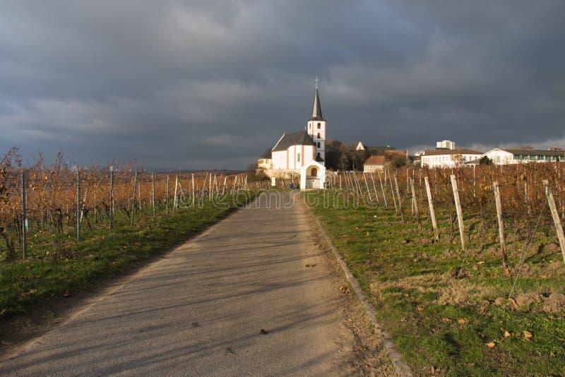 Weinberge mit Kirche in Hochheim, Deutschland stockbild