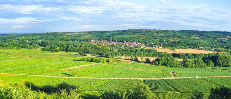 Weinberge nahe Santenay, Lyon - Frankreich lizenzfreies stockfoto