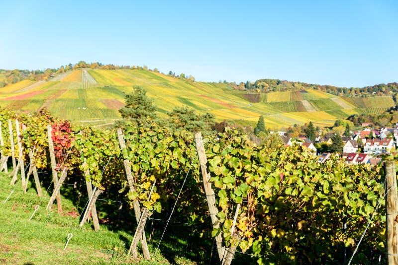 Weinberge in Stuttgart, Uhlbach am Neckar-Tal - schöne Landschaft im autum in Deutschland stockfotografie