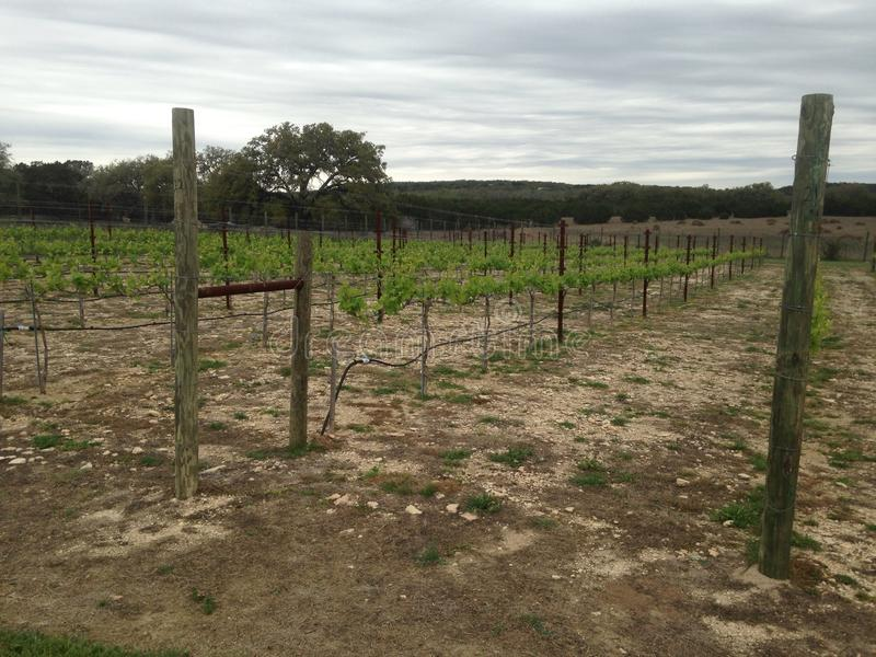 Weinberge in Texas lizenzfreies stockfoto