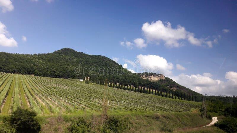Weinberge in Toskana lizenzfreies stockbild