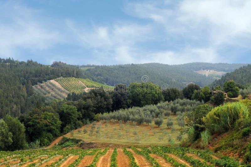 Weinberge und olivgrüne Felder in Chianti, Toskana lizenzfreie stockbilder