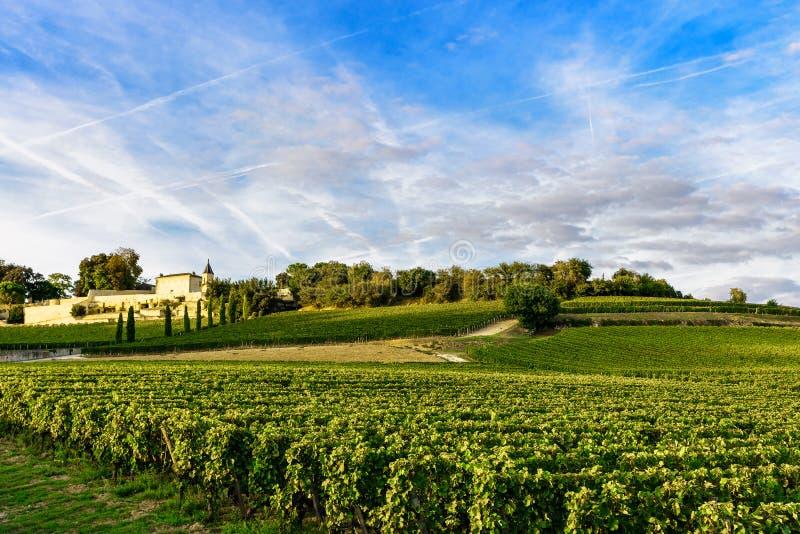 Weinberge von Saint Emilion, Bordeaux Wineyards in Frankreich stockbild