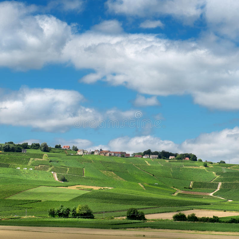 Weinberglandschaft, Reims, Frankreich lizenzfreie stockfotos