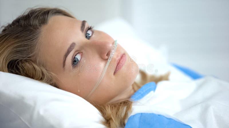 Weine mit Sauerstoff nasaler Kanüle, die sich die Kamera anschauen, vor der Operation beunruhigt stockfotografie