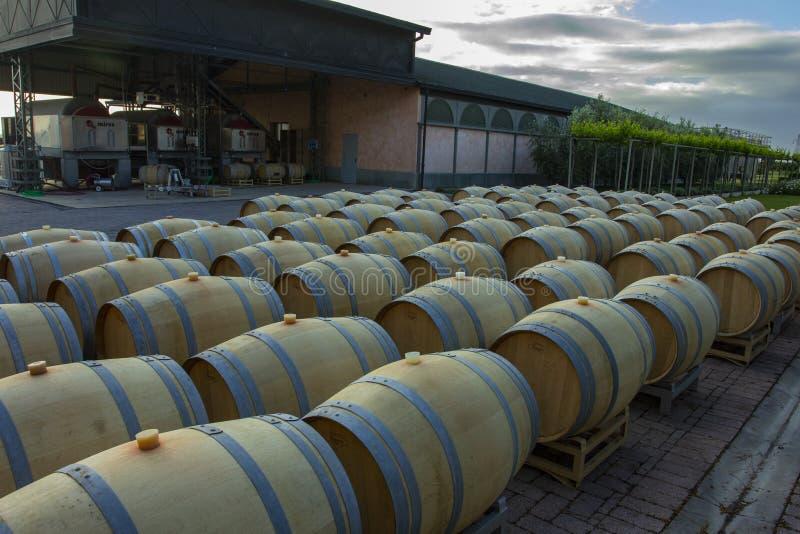 Weinfässer im Keller der Weinkellerei Weinfässer in den Weinwölbungen Produzent: Antinori Bolgheri, Toskana, Italien stockbild