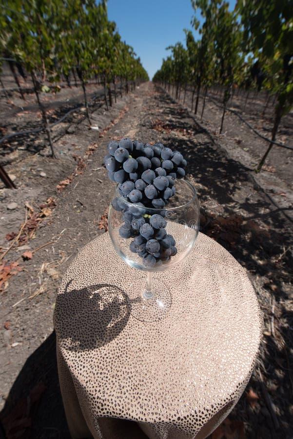 Weinglas mit einer Weintraube auf Tabelle im Weinberg lizenzfreie stockfotos