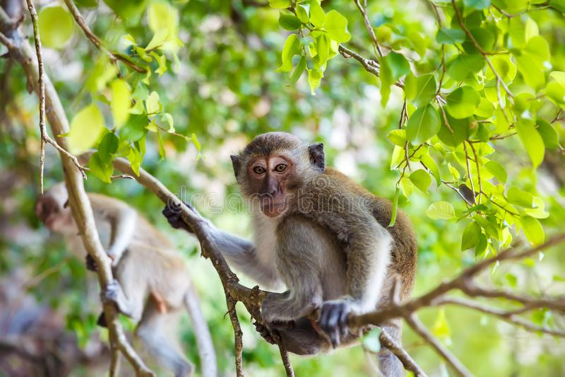 Weinig aap in de wildernis op een boom stock fotografie