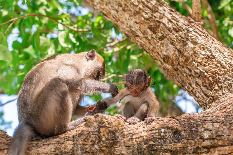Weinig aapportret Zit op een boom met zijn mamma royalty-vrije stock fotografie