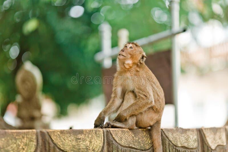 Weinig aapzitting op een bank in Thailand Aap op de achtergrond van de wildernis in het Park in Thailand royalty-vrije stock fotografie