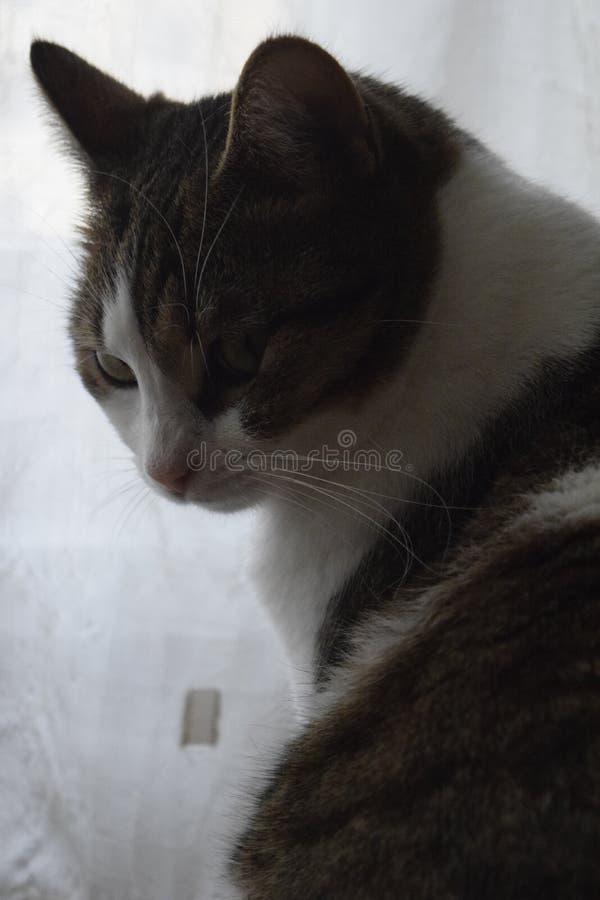 Weinig aardige kat stelt stock fotografie