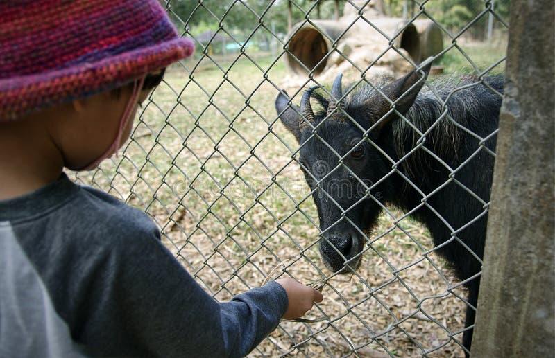 Weinig Aziatische jongen die serow in omheining bij dierentuin voeden royalty-vrije stock foto