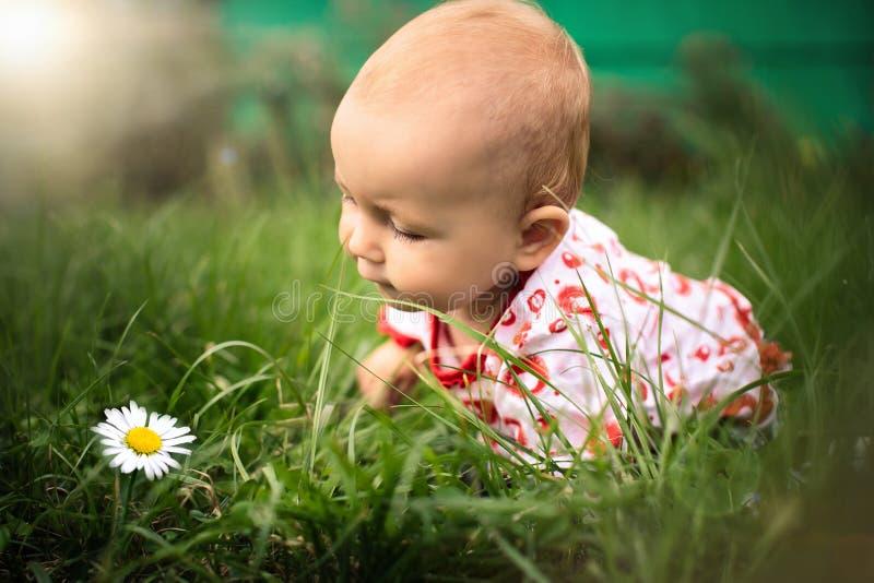 Weinig baby-meisje op het gras stock foto's