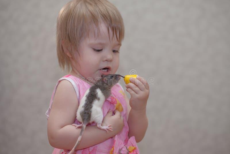Weinig baby voedt de muis Het spelen van het meisje met een rat royalty-vrije stock foto's