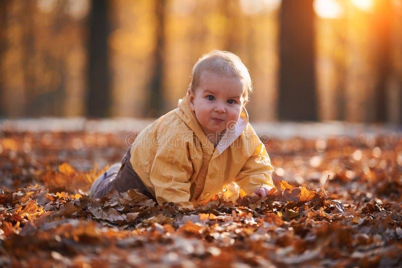 Weinig babyjongen die onder de gevallen bladeren in het de herfstpark kruipen bij zonnige dag stock foto