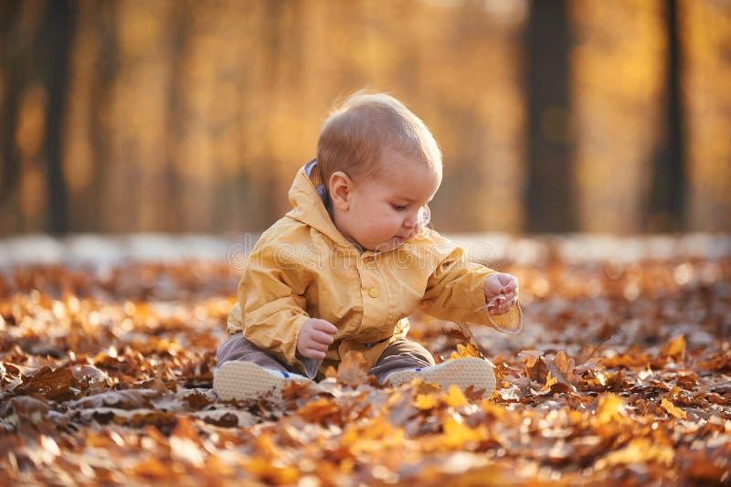 Weinig babyjongen die onder de gevallen bladeren in het de herfstpark kruipen bij zonnige dag royalty-vrije stock afbeelding