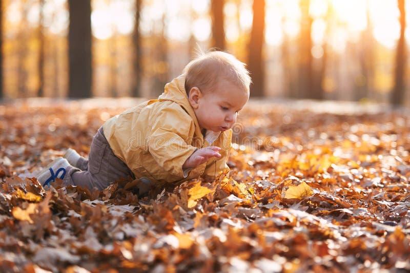 Weinig babyjongen die onder de gevallen bladeren in het de herfstpark kruipen bij zonnige dag stock afbeelding