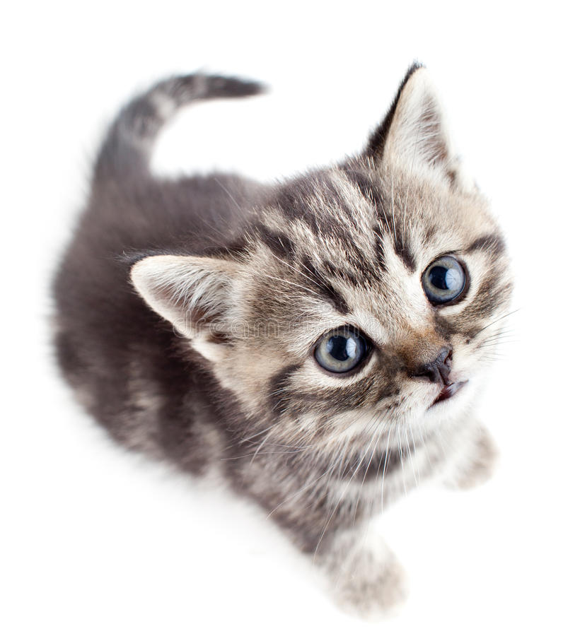 Weinig babykatje dat upwards hoogste mening kijkt stock foto's
