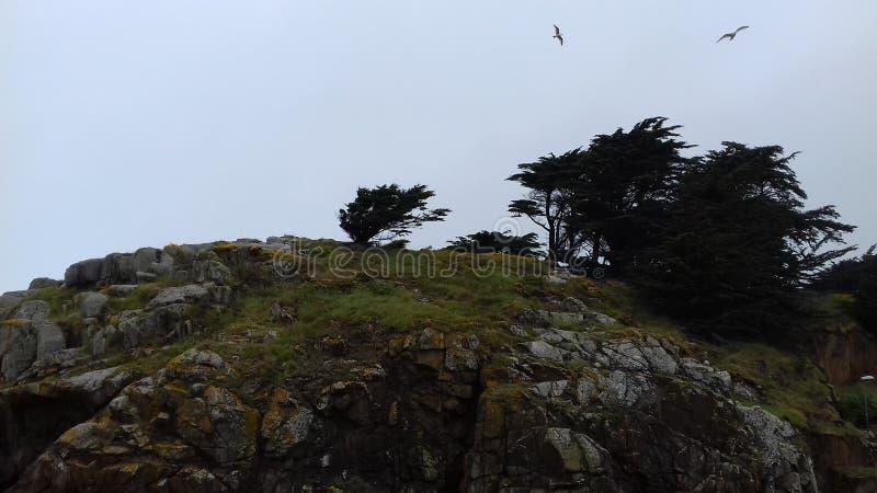 Weinig berg met bomen royalty-vrije stock afbeelding