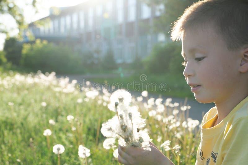 Weinig blazende de paardebloembloem van het jongensprofiel bij de zomer Gelukkig glimlachend kind dat van aard in park geniet royalty-vrije stock foto's