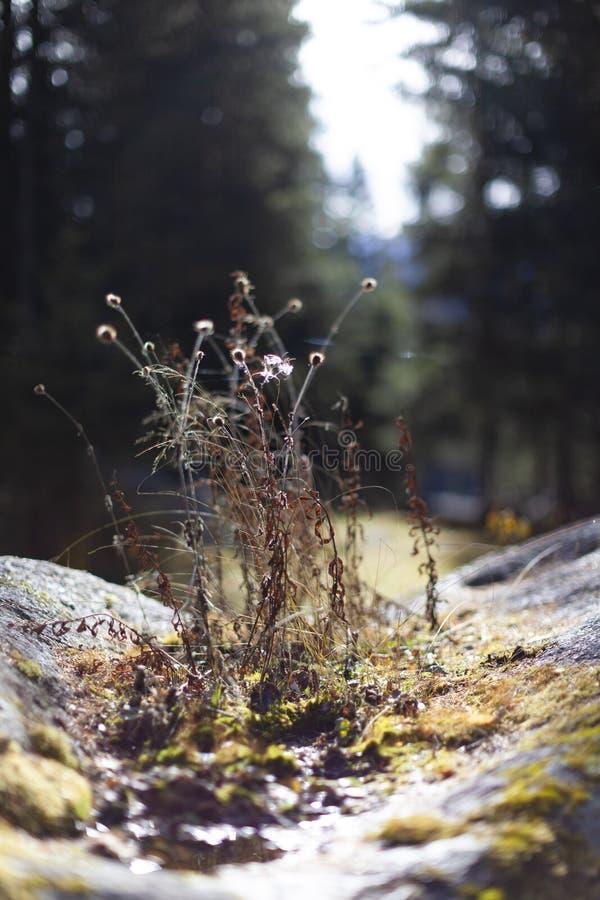Weinig bloemen op de mossen royalty-vrije stock fotografie