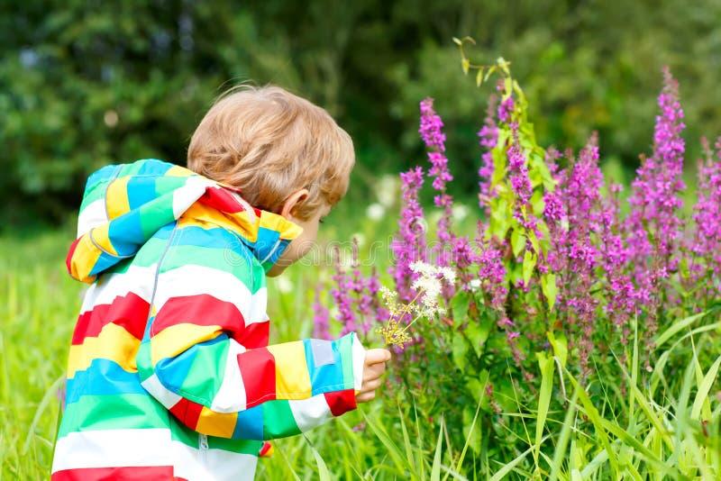 Weinig blonde jongen met partij van wilde bloemen op zonnige de zomerdag Gelukkige kind enjyoing aard Jong geitje met bloemboeket royalty-vrije stock fotografie
