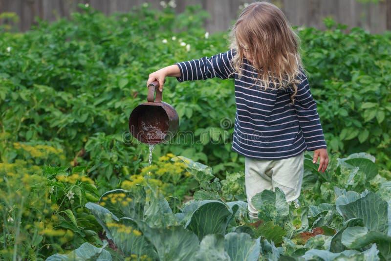 Weinig blondemeisje het water geven peperinstallaties op het groene bed van de de zomertuin stock afbeeldingen