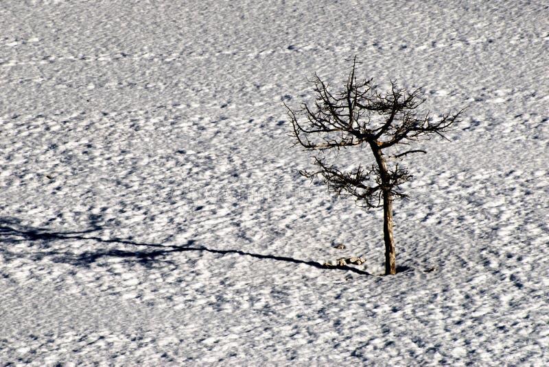 Weinig boom in de sneeuw stock foto