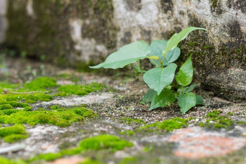 Weinig boom en mos groene varens op bakstenen muur stock afbeeldingen